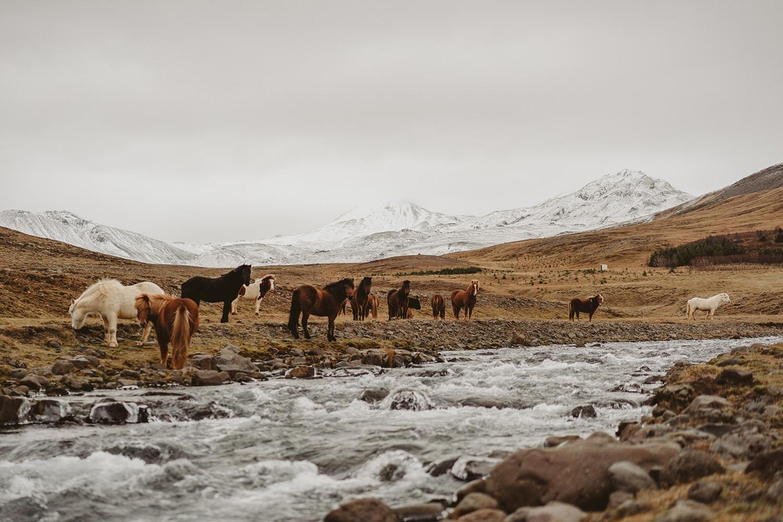 Sesja ślubna na Islandii 11